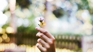 Blumen in einer Hand