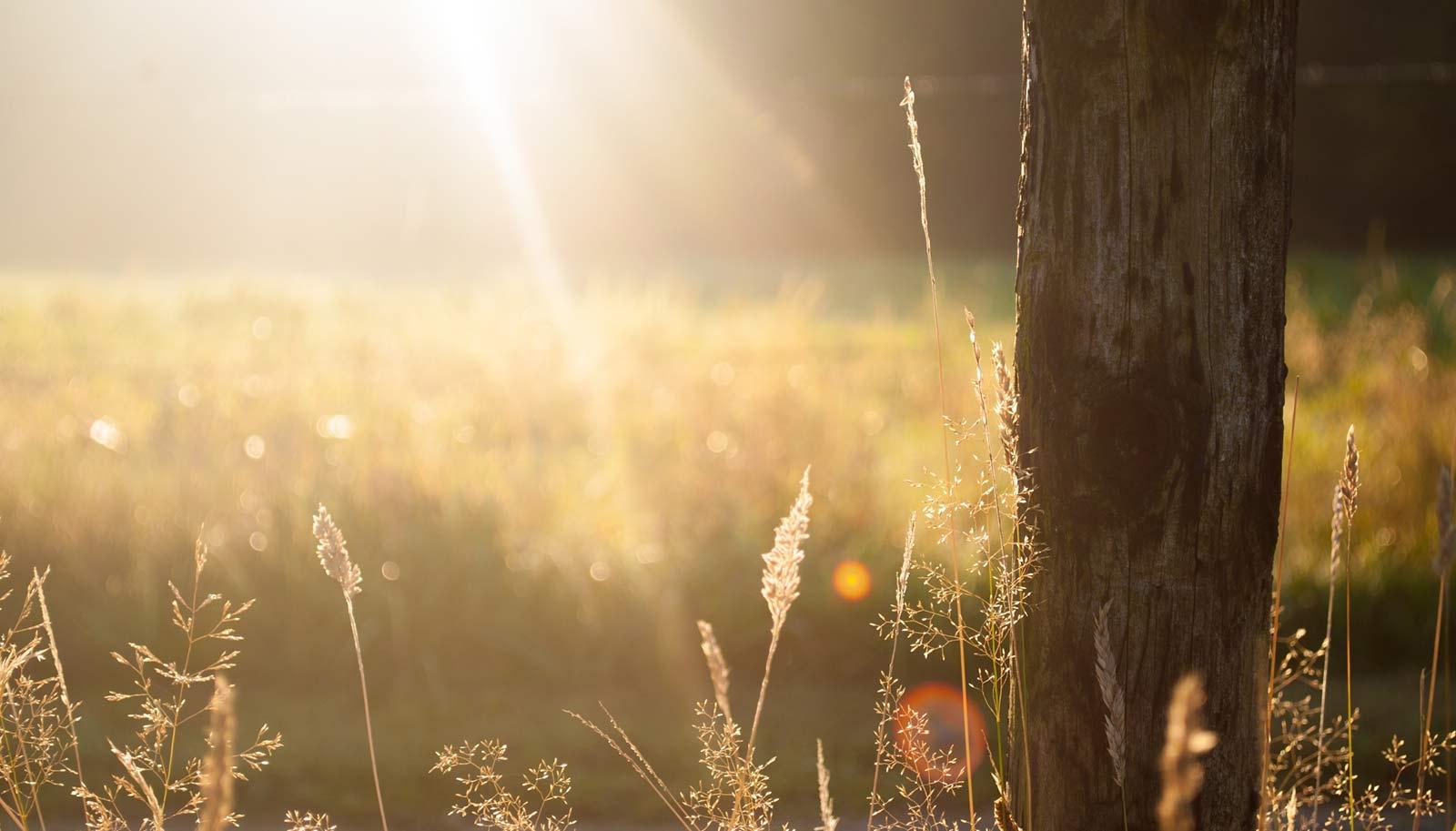 Sonnenstrahlen auf Sommerwiese