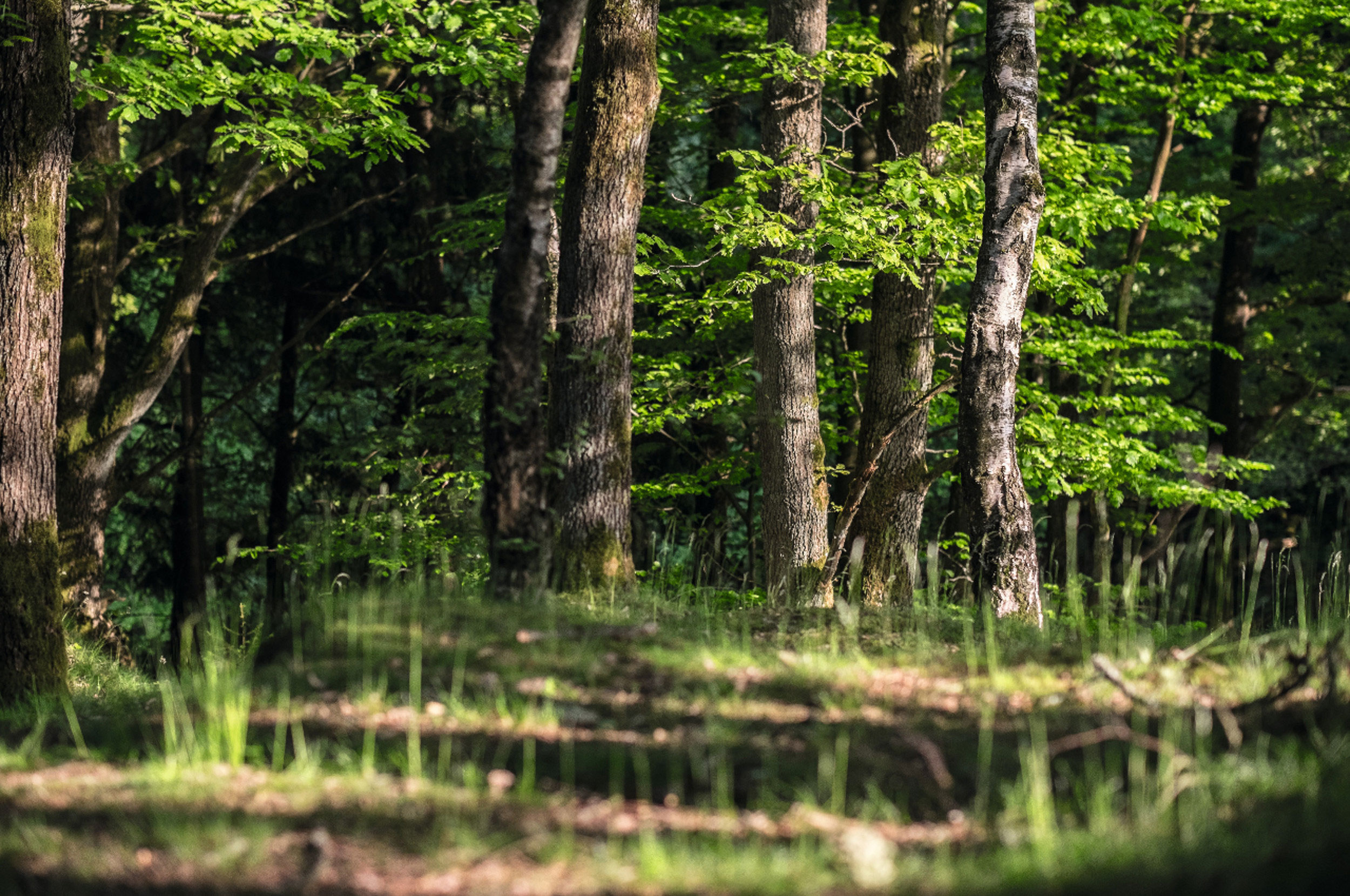 Bäume im Zoo NK
