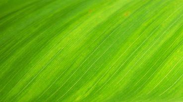 grüne Struktur
